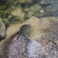 Water - Wild Locsha