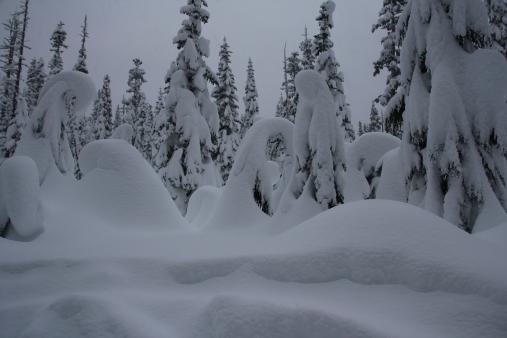 Solstice Spirits - Alpine Hemlock & Winter Snow