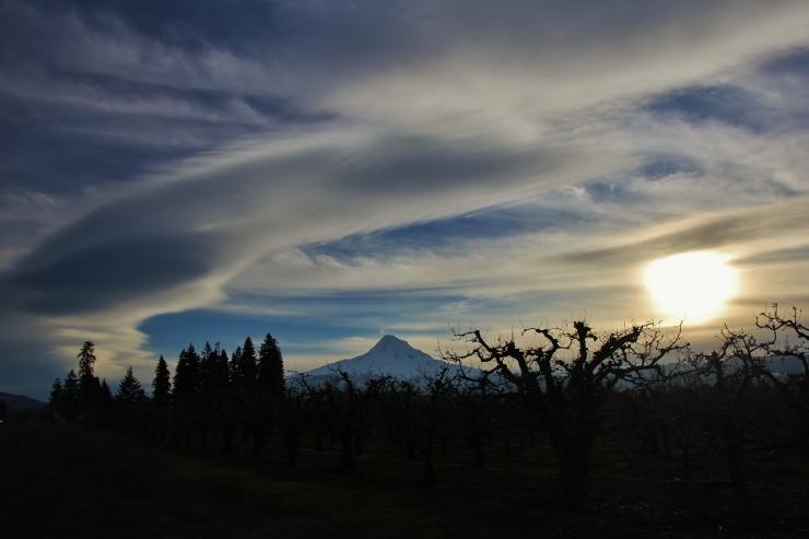 Wy'East viewed from the apple orchards in the Hood River Valley at days end