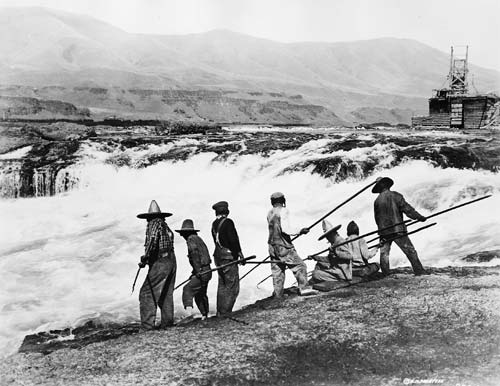 Indians spearing fish at Celilo Falls with fishwheel in background, c.1905. Benjamin Gifford, photographer. Gi 7784-a Indians used dipnets, gaffhooks, and spears to catch fish throughout the early part of the 20th century when fishing platforms were only accessible by rowing or swimming through swift currents. The wooden structure at the right is a fishwheel, first used on the Columbia River by Euro-Americans in the 1880s. By the turn of the century, around seventy-five fishwheels lined the banks of the Columbia River. The fishwheels were positioned in currents close to the riverbank or were mounted on scows and consisted of dippers that scooped up migrating salmon. The Seufert Brothers Company owned and operated numerous fishwheels around the Celilo Falls area, including the infamous Fishwheel No.5 that made a record catch of 70,000 pounds on a single day in 1913. Fishwheels were outlawed in Oregon in 1926 and in Washington in 1934. - Oregon Historical Society