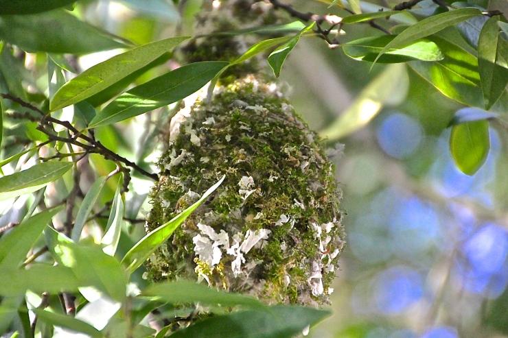 Bushtit Nest - Flowers, Moss, Paper & Twigs