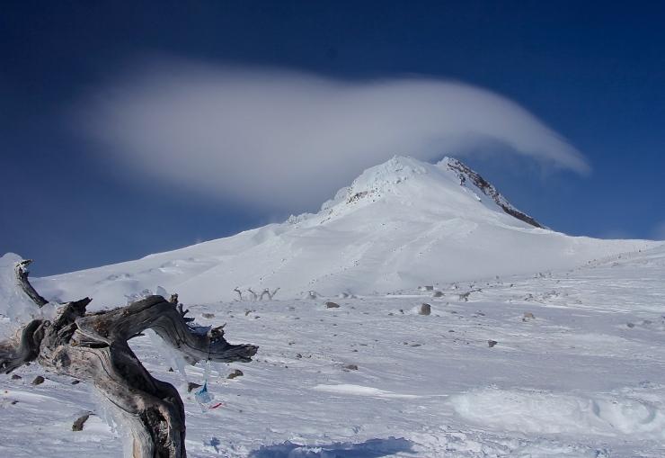 Wy'East Summit with frozen Tibetan Prayer Flags on Elder Whitebark Pine Ghost Tree