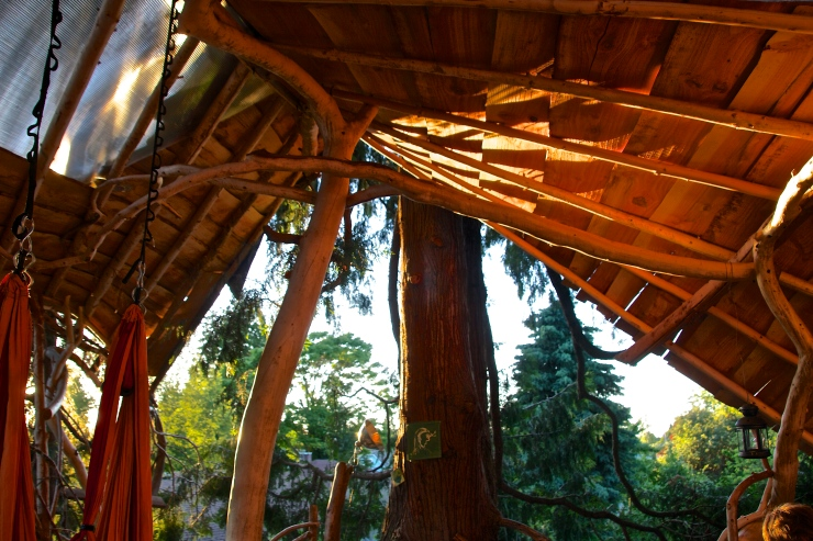 Light in the TreeHouse
