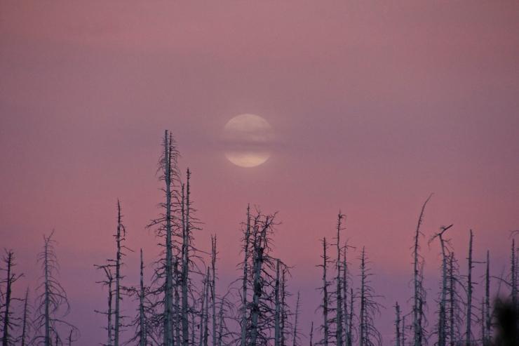 Huckleberry Medicine Moon