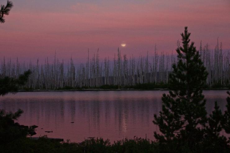 Huckleberry Medicine Moon II