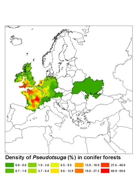 Pseudotsuga in Europe today