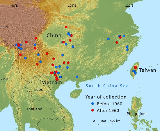 Pseudostuga sinensis is marginalized and threatened in China by agricultural clearing
