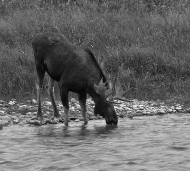 Dusk along the Gros Ventre River