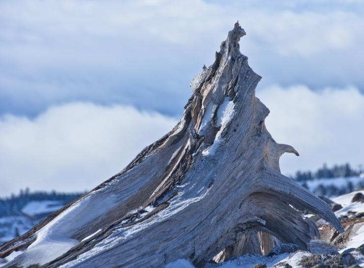 winter wyeast sculptures-11