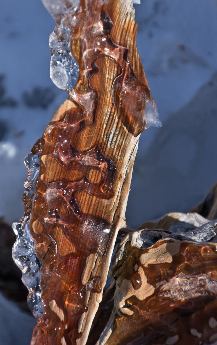 winter wyeast sculptures-9